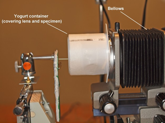 Lateral view of the set-up with the yogurt container flash diffuser (white box) in place