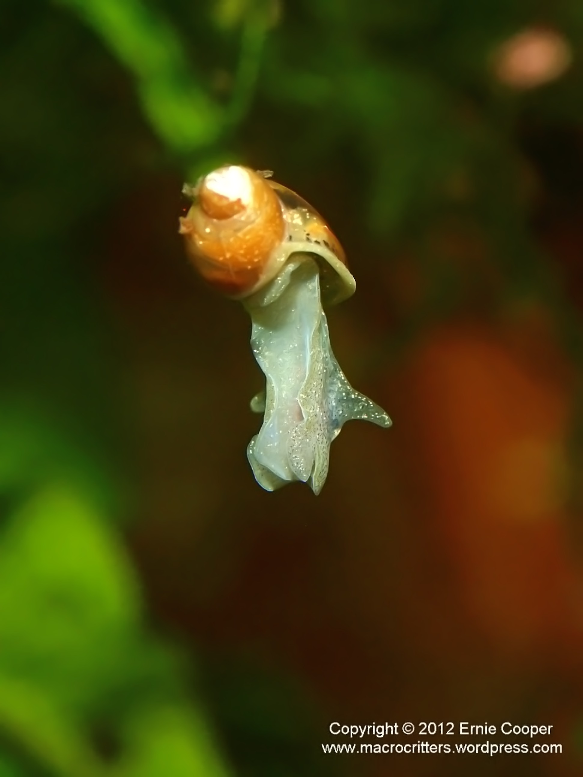 flying snail 4 copyright ernie cooper 2012_filtered