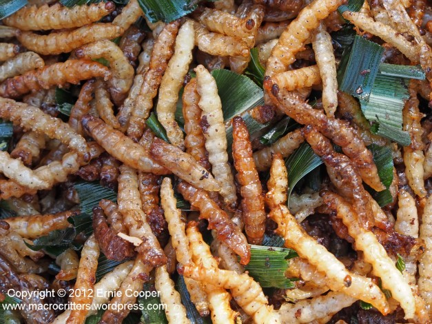 Fried mealworms (beetle larvae)