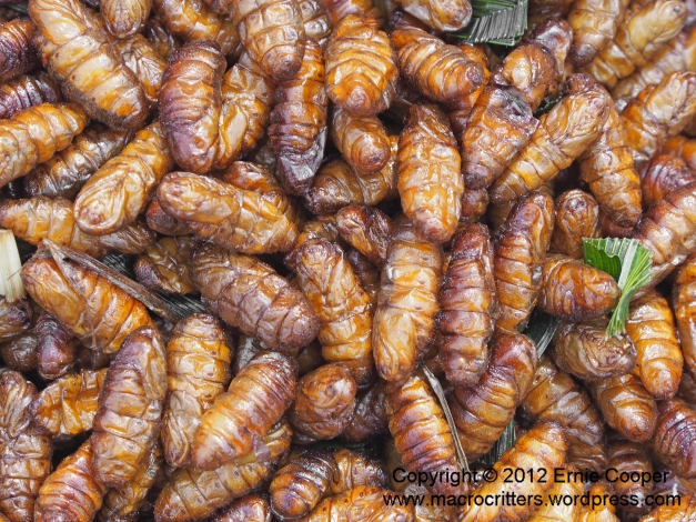 Fried insect pupae