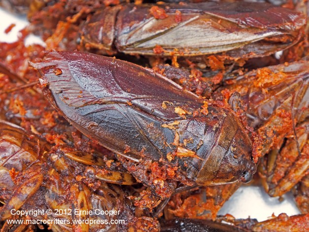 Fried giant water bugs