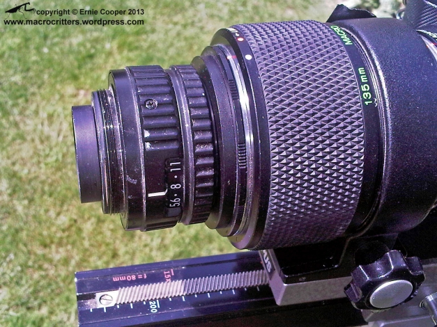Nikkor 50mm F2.8 enlarger lens reversed and mounted (using adapters) on an Olympus telescopic auto extension tube 65-116