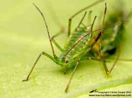 Image result for Aphid